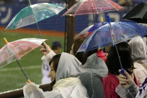 Swallows Umbrellas